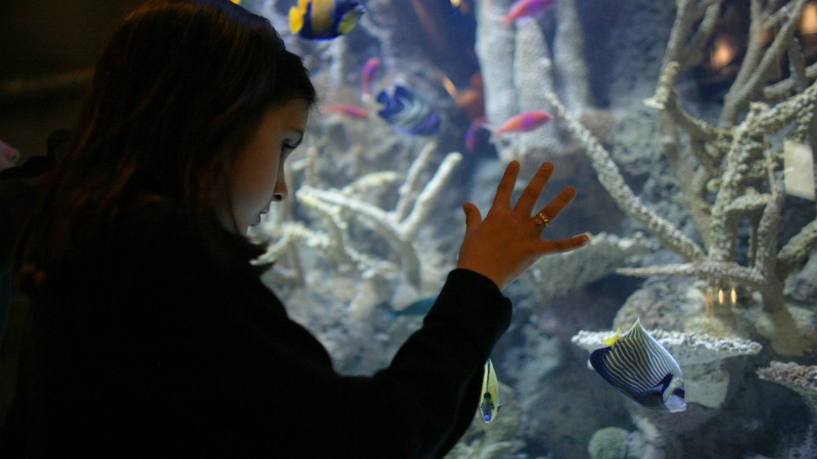 Things to Do in Houston, Texas - Downtown Aquarium
