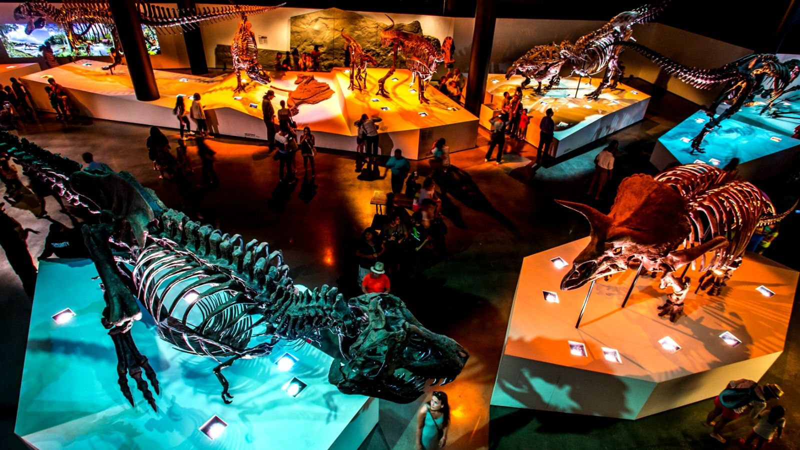Things to Do in Houston, Texas - Houston Museum of Natural Science