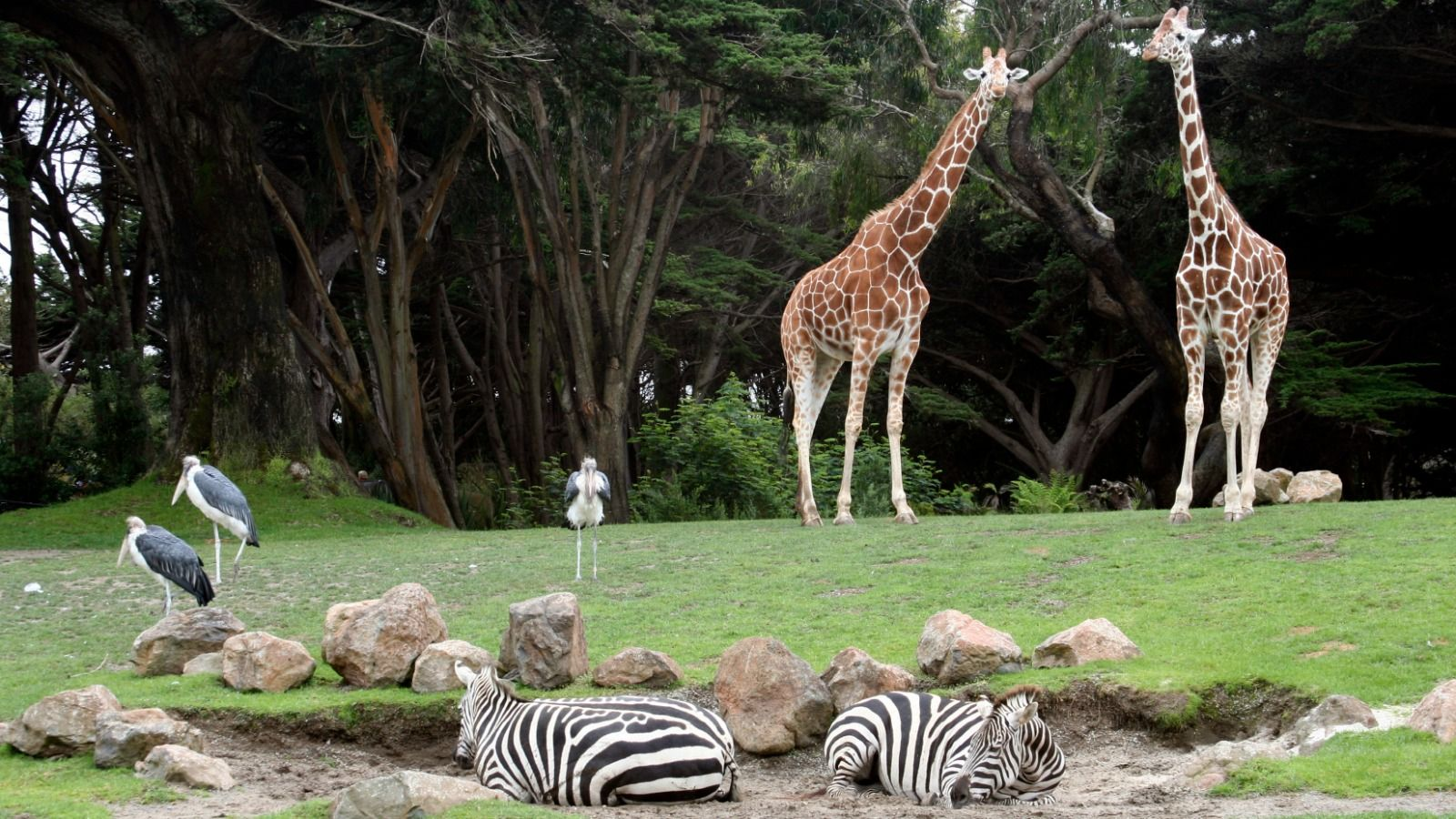 Things to Do in Houston, Texas - Herman Park and Houston Zoo
